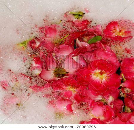 bubly roses
