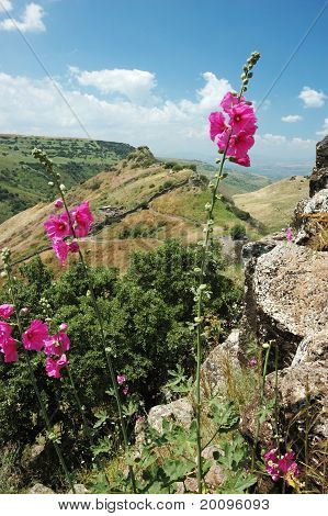 Israeli National Park Gamla At The Golan Hights - Symbol Of Heroism
