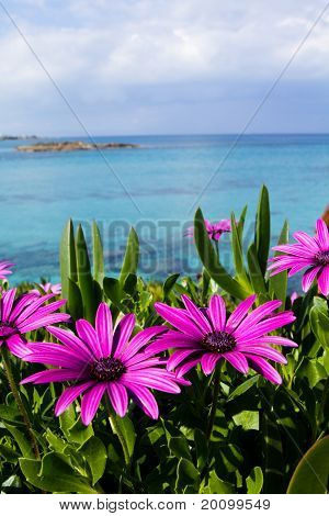 Purple Wild Flowers On Beach