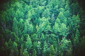 Fir Forest View From Above poster