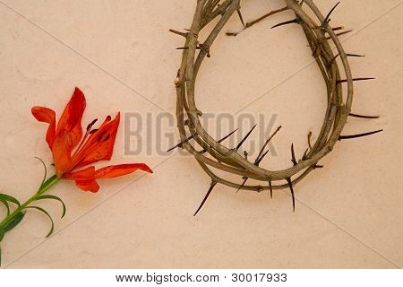 Crown Of Thorns And Orange Lily