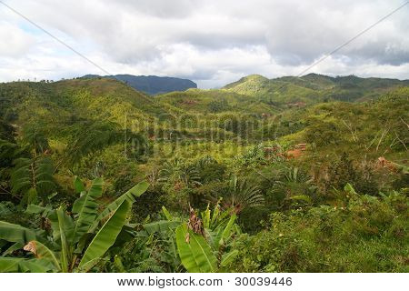 Madagascar jungle