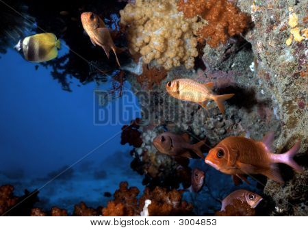 Fiji Fish Grotto