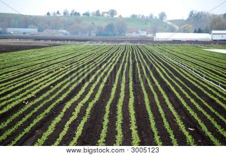 Freshly Planted Field