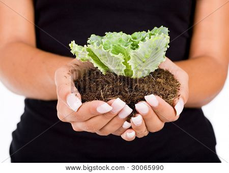 Young woman holding young plant in her hands