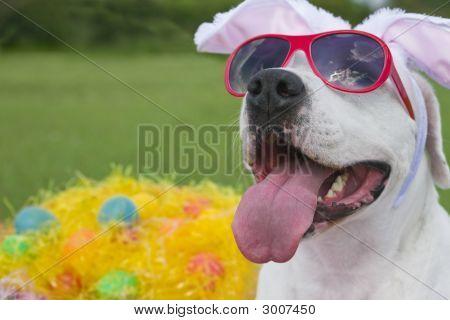 Easter Pooch