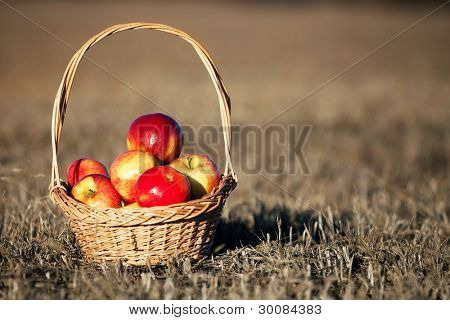 Healthy Organic Apples in a Basket - natural sunset light