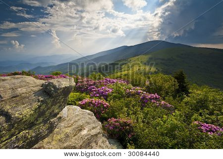 Appalachian Trail Roan Mountains Rhododendron Bloom On Blue Ridge Peaks