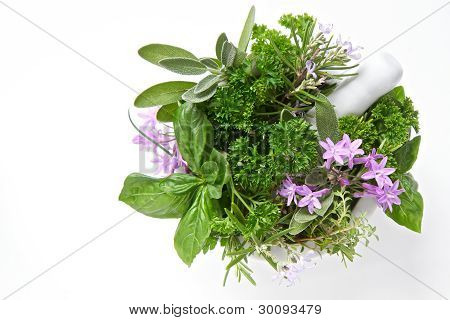 Herbs Isolated On White