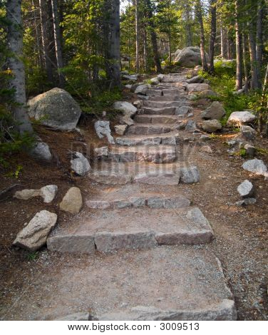 Forest Stair
