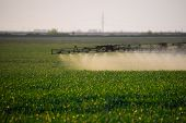 Jets Of Liquid Fertilizer From The Tractor Sprayer. Tractor With The Help Of A Sprayer Sprays Liquid poster