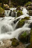 Nature Rainforest River Cascade. Stream In Forest Nature. Green Forest Stream. Nature. Stream. Natur poster
