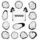 Collection Of Tree-rings. Set A Cross Section Of The Trunk With Tree Rings. Vector Illustration. Log poster