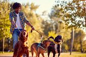 Walking dogs - Happy man dog walker enjoying with dogs poster