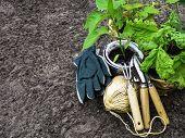 Spring Concept, Gardening Tools For Gardening, Seedlings, Seasonal Garden Work. poster