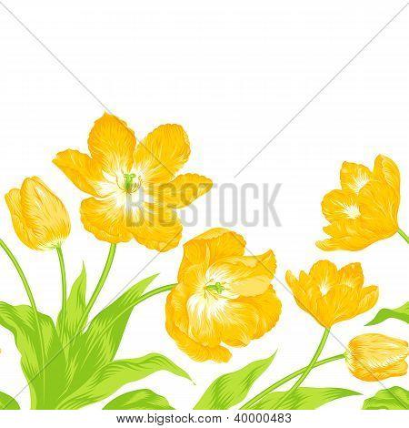 Ramo de tulipanes, composición frontera