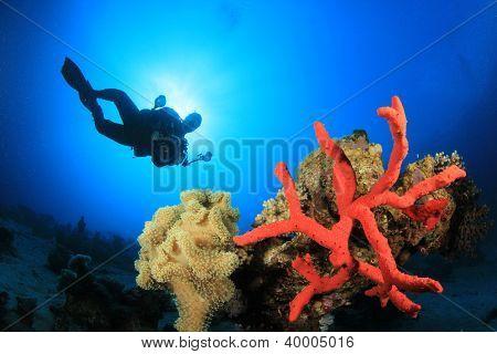 Coral, Sponge, Scuba Diver