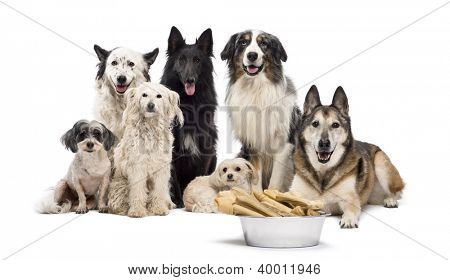 Group of dogs with a bowl full of bones in front of them sitting against white background