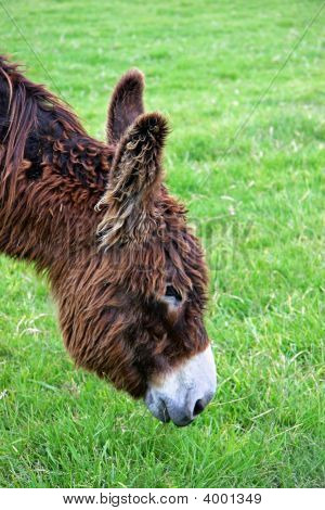 Donkey Faces Right