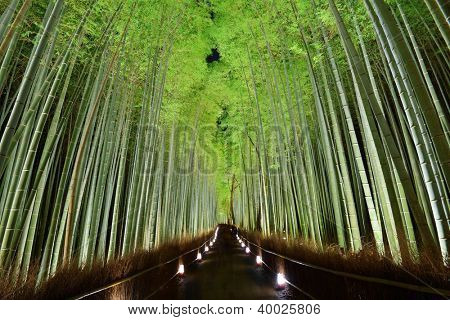 The bamboo forest of Kyoto, Japan.