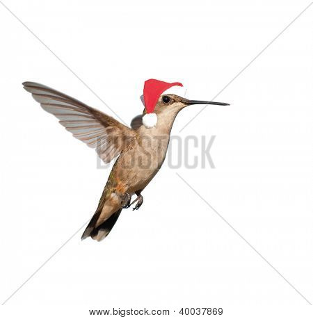 Female Hummingbird in flight wearing a Santa hat - Santa's little helper isolated on white