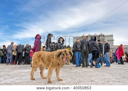 Homeless Stray Dog Among People In City