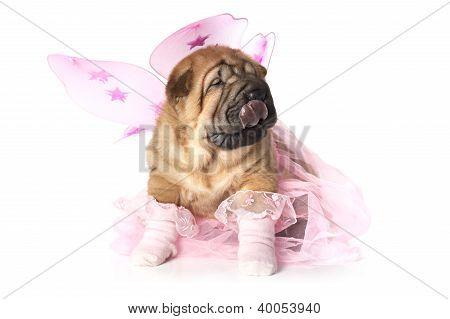 Chinese Shar-pei Puppy