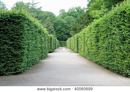 Path Between Hedges