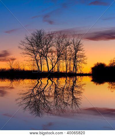 Árvores sem folhas de cena sagacidade no fundo por do sol, perto do Lago de noite