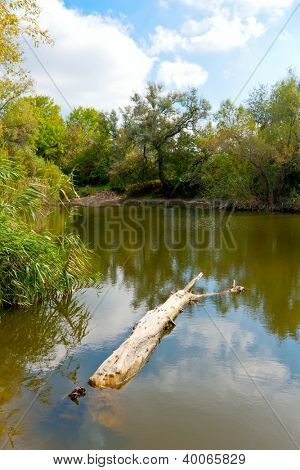 Old tree log in lake water in nice day
