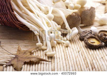 varity of mushrooms