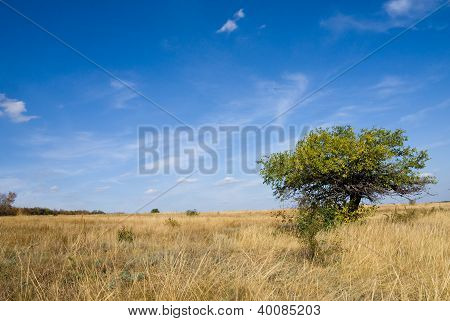 Autumn Steppe