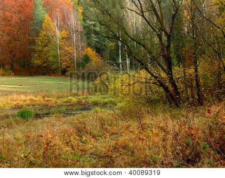colorful autumn view