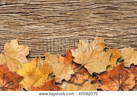 Autumn Background. Dry Leaves On The Old Rotten Board