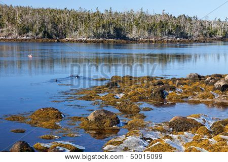 Shoreline along rocky coast of Nova Scotia.