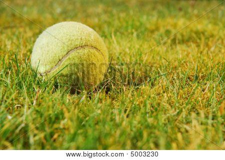 Pelota de tenis sobre hierba