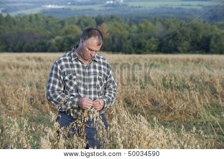 Farmer checking his crop of oats