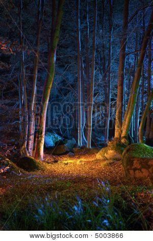 magische Nacht in der Gesamtstruktur