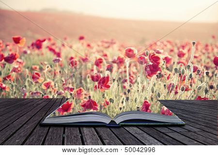 Creative Concept Pages Of Book Stunning Poppy Field Landscape Under Summer Sunset Sky With Cross Pro