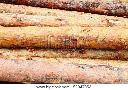 Pine Logs Stack Background