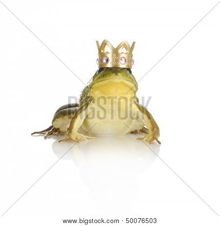 handsome prince - bull frog wearing gold crown looking at viewer isolated on white background