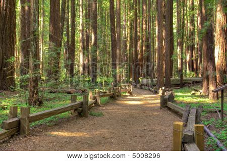 Armstrong Redwood Forest Park