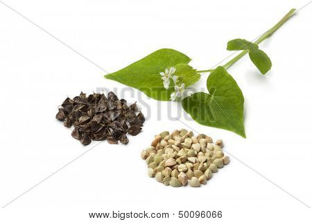Flowering buckwheat with seeds on white background