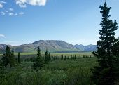 stock photo of denali national park  - Mountains and forests in summer in Alaska - JPG