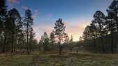 A Sunrise In The Ponderosa Pines