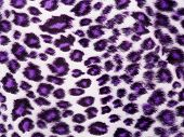 Leopard Printed in purple