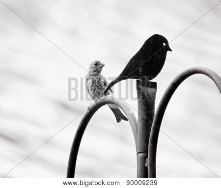 a bird looking at a metal decoration lovingly (focus on the meta
