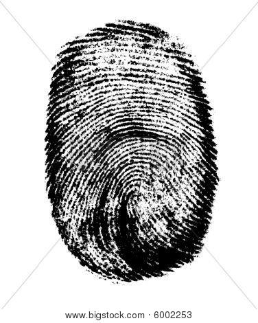 Vector fingerprint