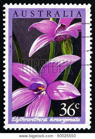 Postage Stamp Australia 1986 The Notched Elythranthera, Orchid