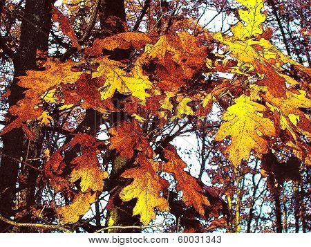 Oak Leaves in the Woods